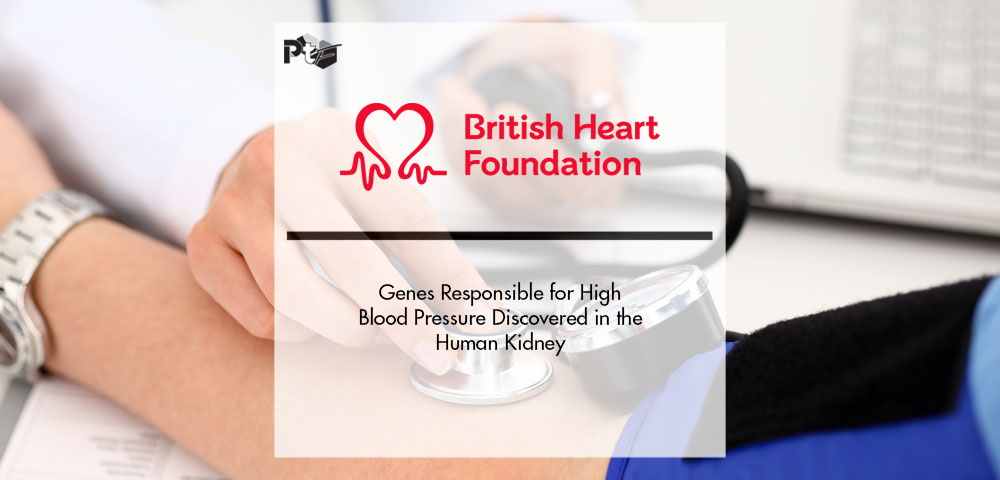 Genes Responsible for High Blood Pressure Discovered in the Human Kidney   Pharmtech Focus